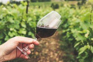vigne margaux