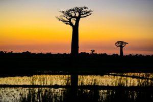 soleil Madagascar